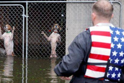 Este voluntario rescata a seis perros encerrados en una jaula inundada por el huracán Florence