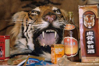 ¡Vergüenza!: China permite el uso medicinal de cuernos de rinoceronte y huesos de tigre