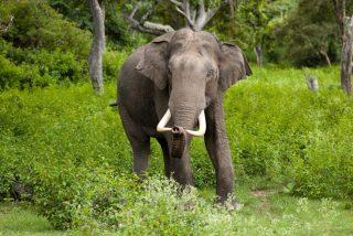 El atroz instante en que un elefante salvaje alcanza al niño y lo mata