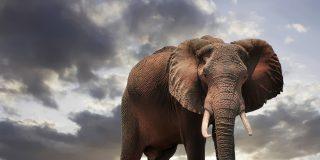 Mira este vídeo y dinos si los elefantes no son rencorosos y tienen tanta memoria como mala leche