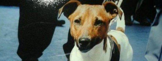 ¿Sabías qué la mafia ofrece 5.000 euros por la cabeza de este perrito?