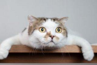 El misterio del 'gato fantasma' que pasea por el patio segundos antes de desaparecer