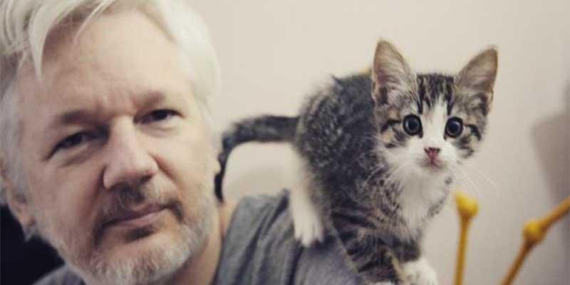 El gobierno de Ecuador comunica a Julian Assange que se encarga de su gato o lo echa