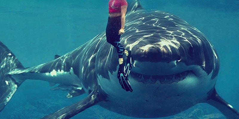Un tiburón ataca a un surfista en un brazo y este se salva al golpearlo en la nariz