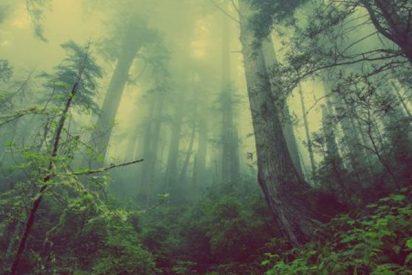 Este vídeo del suelo respirando en un bosque se ha hecho viral y no es para menos, porque es aterrador