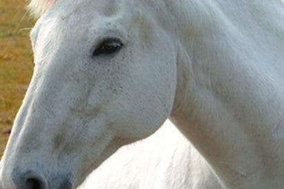 Este caballo cocea con fuerza a un niño que solo quería jugar