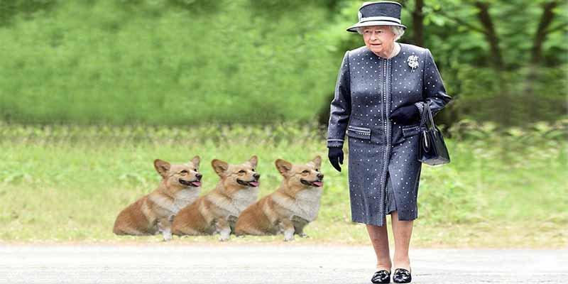 Murió 'Whisper', el último perro corgi de la reina Isabel II