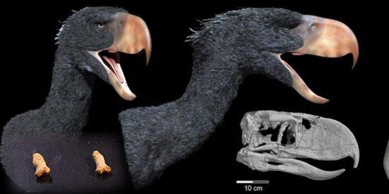 Encuentran los restos de un niño neandertal devorado por un ave gigante