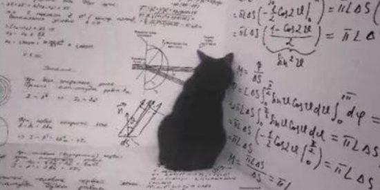 ¿Qué pasa si el gato de Schrödinger es más listo de lo que pensamos?