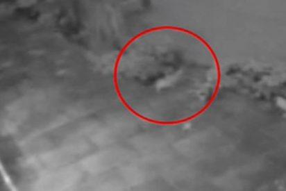 """Este """"gato fantasma"""" pasea por un patio segundos antes de desaparecer"""