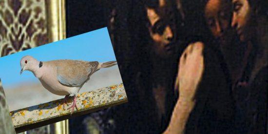 Esta paloma daña con sus cacas una obra de arte del siglo XVII en Italia