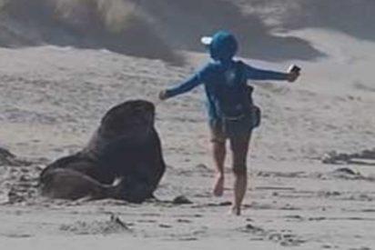 Esta turista se pone a hacer la tonta junto a un lobo marino en la playa y casi resulta atacada por el animal