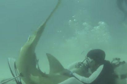 Así lucha este buzo con un tiburón para quitarle los anzuelos de la boca