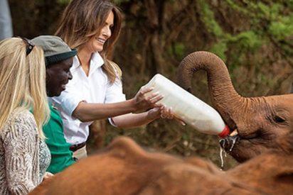 Este simpático elefante se lanza sobre Melania Trump y casi la tumba