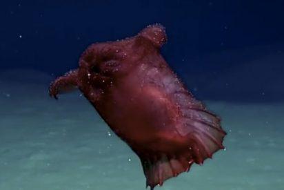 """Consiguen filmar al """"monstruo del pollo sin cabeza"""" en el océano Antártico"""