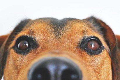 Denuncian a esta perra que se hacía pasar por callejera para que le dieran hamburguesas