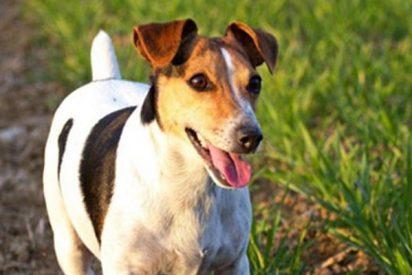 ¿Sabes por qué la mafia italiana ofrece 5.000 euros por la cabeza de este perrito?