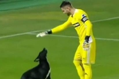 Este perro juguetón invade el campo y paraliza durante varios minutos un partido de fútbol