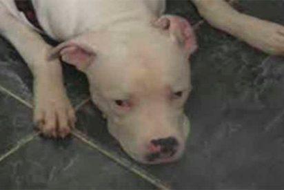 La bestia que mordió en la cara a una niña de 14 años en la Guajira, Colombia