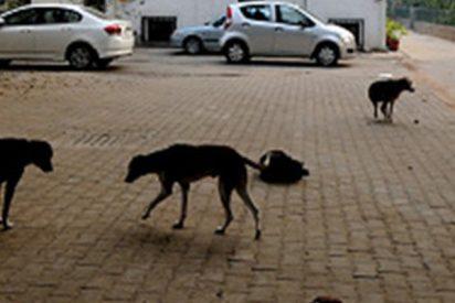 Este perro 'llora' al reencontrarse con su amo tras pasar años en la calle