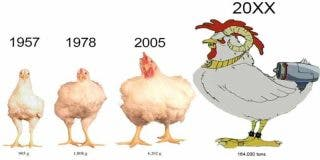 Pollo in vitro: la empresa que produce carne sin matar un solo animal