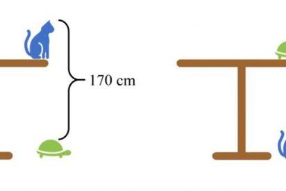 ¿Cuánto mide la mesa?; Este problema matemático se ha vuelto viral