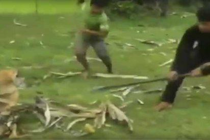 Los tres niños se enfrentan a una gigantesca serpiente para rescatar a su perro