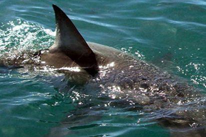 Lanza un cebo para atraer a un tiburón y termina en un 'tira y afloja' con el animal