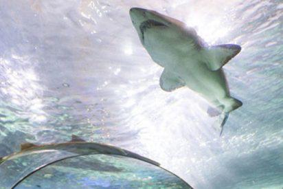 Este hombre se desnuda y sumerge en un acuario lleno de tiburones