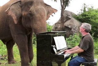 Concierto para piano y elefantes: Pianista da conciertos para elefantes ciegos en un santuario de Tailandia