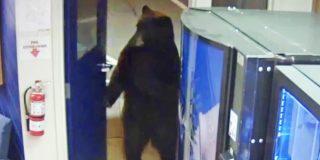 Este oso realiza dos patas una visita a los policías de la comisaría