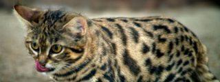 Gyra: es un gato adorable pero también el más mortífero del mundo
