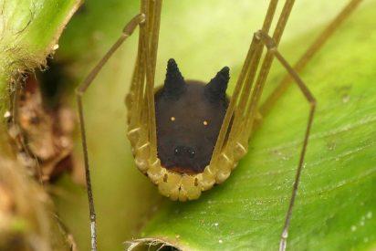 Así es la inquietante araña con cabeza de perro