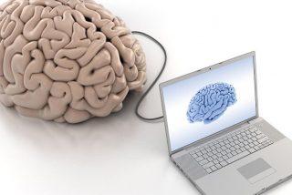 El crecimiento del cerebro no equivale a una evolución de la inteligencia