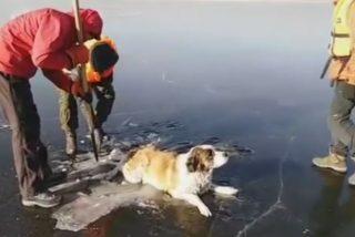 Vídeo Viral: El emocionante rescate de este perro atrapado en el hielo