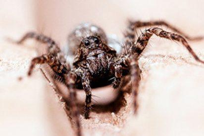 Miles de arañas y enormes telarañas aparecen misteriosamente en una carretera en EE.UU.