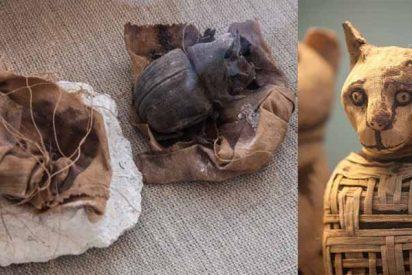 Espectacular descubrimiento arqueológico en Egipto: estatuas de gatos y las primeras momias de escarabajo