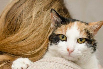 Así fue el tierno reencuentro de una pareja afectada por los incendios de California con su gato perdido