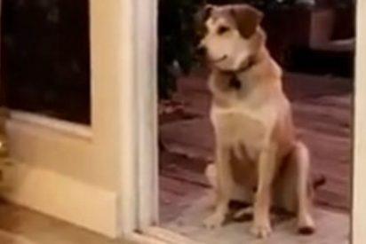 Este perro que espera sentado hasta que le abran una puerta invisible arrasa en las redes