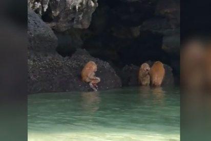"""""""Troles parecidos a los ewoks"""" realizan un extraño ritual en esta playa tailandesa"""