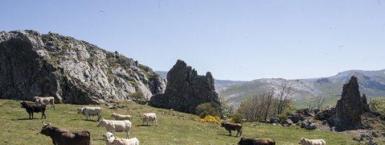 Carne de Cervera tendrá 50.000€ de la Diputación