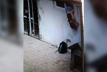 La mujer lagartija: la vil ladrona que se colaba por las ventanas de sus vecinos y les robaba día a día (Vídeo)