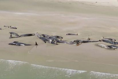 """""""Nunca olvidaré sus gritos"""": el testimonio de la joven que encontró 145 ballenas agonizando en la playa"""