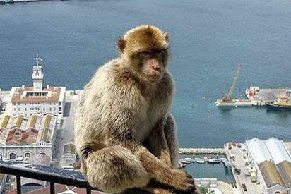 El 'okupa' Pedro Sánchez también hace el ridículo en Gibraltar