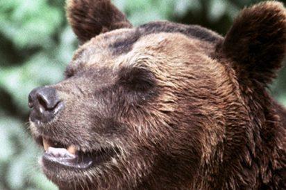'Sobornan' a este oso con galletas desde un coche para que les 'permita' pasar