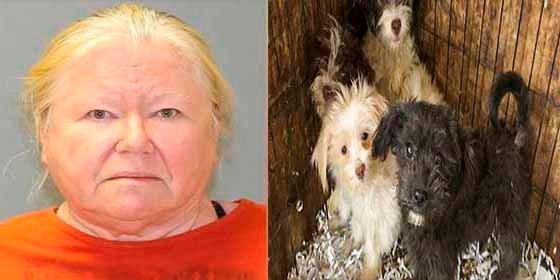 La sorprendente excusa de una mujer que guardó en su casa 44 cadáveres de perros durante 7 años