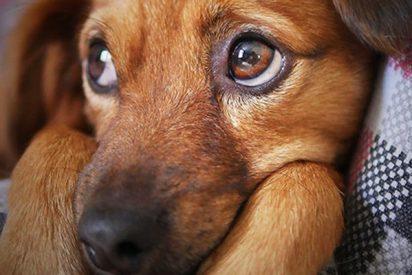 Estas son las 15 frases que solo entienden los que tienen perro