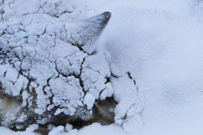 Así fue el impresionante rescate de este perro que se quedó atrapado en el hielo