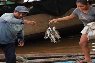 Supervivencia y dignidad para los pueblos de la Amazonía, de la mano de Cáritas