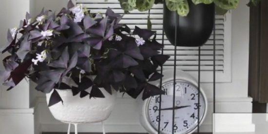 ¿Sabes qué hacen tus plantas cuando no estás en casa?; vas a alucinar